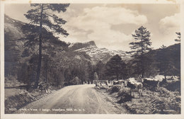 Norway PPC Ulvik - Voss. I Bakgrunden Vassfjøra Cow Kuh Fot. NORMANN, Hamar 1933 BERGENBANENS ? Cds. Echte Real Photo - Noruega