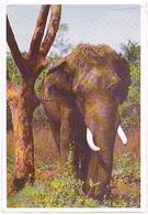 ANIMAUX  ELEPHANT    CPM    ZO147 - Elephants