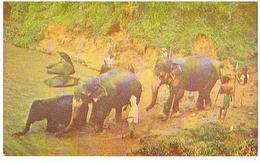 ANIMAUX   ELEPHANTS   CPM TBE   ZO149 - Elephants