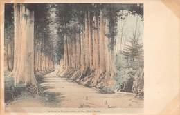 Japan  日本  Avenue Of Cryptomérias On The Nikko Kaido       M 3058 - Otros
