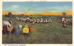 Harvesting Rice , Philippines Filippijnen     M 3098 - Philippines