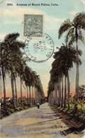 Cuba , Avenue Of Royal Palms      M 3138 - Other