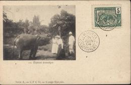 Sur CPA éléphant Domestique Série A CFCO Congo Français YT Congo Fr 30 Panthère CAD Mayuvra 21 Juin 04 - Covers & Documents