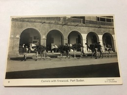 SUDAN - CAMELS WITH FIREWOOD - PORT SUDAN - 1950   - POSTCARD - Sudán