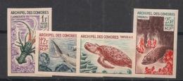 Comores - 1966 - N°Yv. 35 à 38 - Faune / Poissons - Non Dentelé / Imperf. - Neuf Luxe ** / MNH / Postfrisch - Vissen