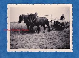 Photo Ancienne Snapshot - Normandie - Bel Attelage Agricole - Machine Agriculture Moissonneuse Cheval Métier Moisson - Beroepen