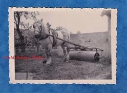 Photo Ancienne Snapshot - Normandie - Attelage Agricole - Cheval Blanc & Machine à Identifier - Ferme Agriculture - Beroepen