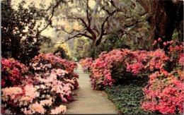 North Carolina Wilmington Orton Plantation Gardens - Wilmington