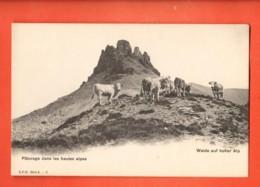 IKA-37 Pâturage Dans Ls Hautes Alpes. Troupeau De Vaches. Lieu à Déterminer. Dos Simple, Non Circulé. CPN No 3 - VD Vaud