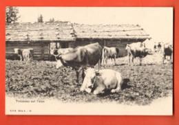 IKA-38 Alpage Avec . Troupeau De Vaches. Lieu à Déterminer. Dos Simple, Non Circulé. CPN No 12 - VD Vaud