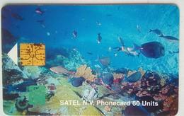 60 Units SATEL Marine Life - Antillas (Nerlandesas)
