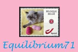 DUOSTAMP** / MYSTAMP** - Chat Persan / Perzische Kat / Persian Cat / Perserkatze - Portée / Nest 04/2020 - Belgique