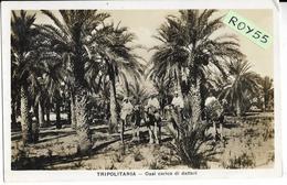 Colonie Italiane Colonia Italiana Tripolitania Libia Veduta Oasi Carico Di Datteri (v.retro/f.piccolo) - Libye