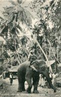 SRI LANKA (Ceylon)  Elephants Passing Through Native Village - Sri Lanka (Ceylon)