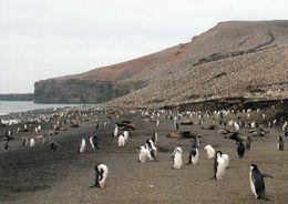 1 AK South Sandwich Islands * Pinguine Auf Der Insel Saunders * Britisches Überseegebiet Im Südatlantik - South Atlantic - Postcards