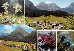 Cartolina Dolomiti Sappada Vedute Stella Alpina - Belluno
