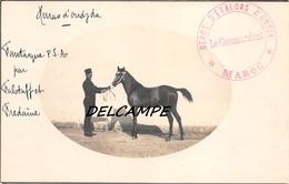 MAROC- HARAS D'OUDJDA -Carte Photo Présentation D'un Etalon FANTASTIQUE - Cachet Dépot D'étalons D'Oudja- Le Commandant- - Horse Show