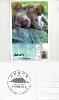 JAPON.Macaques Japonais., Sources Chaudes De Yamanouchi.Parc Aux Singes De Jigokudani. (Nagano). Carte-maximum - Chimpancés