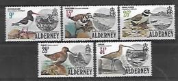 Oiseaux - Alderney