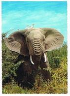 ANIMAUX   ELEPHANT  CPM      ZO186 - Elephants