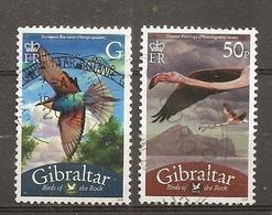 Gibraltar 2008 Oiseaux Birds Obl - Gibraltar