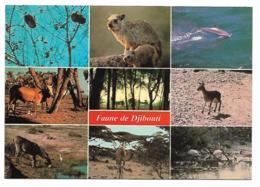CP FAUNE DE DJIBOUTI, REPUBLIQUE DE DJIBOUTI - Djibouti