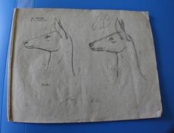 MONIEUX 84-1870 TRÈS ANCIEN CAHIER DE DESSIN MODÈLES A DESSINER-BICHE-RHINO-OURS-CHAMOIS-CHEVREUIL-LOUP-GIRAFE-CERF-LION - Other Collections