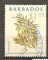 Barbados 20-- Algae Obl - Barbados (1966-...)