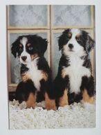 Dog  Chien  Hund /   Poland - Chiens