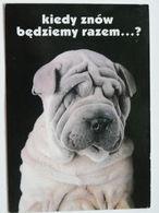 Dog  Chien  Hund / Pug   Poland - Chiens