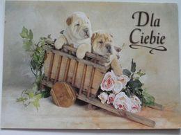 Dog  Chien  Hund / Pug   Poland / Carnet - Chiens