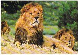 ANIMAUX  LION  CPM  TBE  ZO207 - Lions