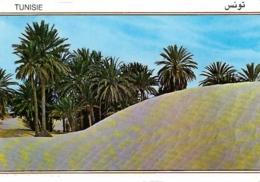TU - Douz - Sahara - Editions Kahia N° 1615 (circ. 1995) - [oasis] - Tunisie