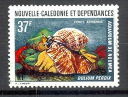 Timbre Oblité - NOUVELLE CALEDONIE - Poste Aérienne - Aquarium Nouméa Dolium Perdix - Y&T PA 152 - Luftpost