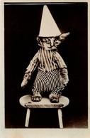 Chat Humanisé- Dressed Cat -katze - Poes Met Punthoed - Gatos