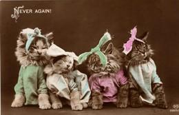 Chats Humanisé- Dressed Cats -katzen - Poezen Met Strik - Chats