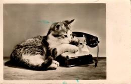 Chat -cat -katze- Poesjes Met Telefoon - Chats