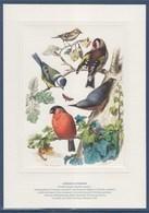 Gravure Par La Poste, Oiseaux D'Europe Roitelet Mésange Chardonneret Bouvreuil Et Sittelle Torchep - Documenten Van De Post