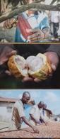 3 Cartes Sur Le CHOCOLAT - Ghana Haïti Brésil - - Ansichtskarten