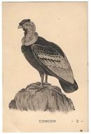 CPA CONDOR Rapace Oiseau Charognardembleme Chili - Pájaros