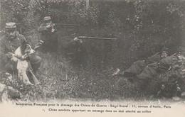 CARTE POSTALE  Chien Estafette Apportant Un Message - Guerre 1914-18