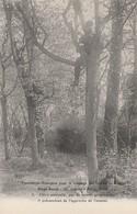 CARTE POSTALE   Chien Sentinelle - Guerre 1914-18