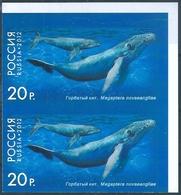 B7488 Russia Rossija Fauna Marine Life Whale Pair Colour Proof - Balene
