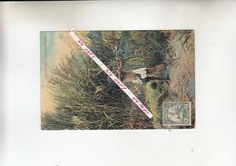 SPIELENDER OVAMBOKNABE 1900 - Sudáfrica
