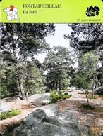 FONTAINEBLEAU - La Forêt  - Photo Les Gorges De Franchard  - FICHE GEOGRAPHIQUE - Ed. Larousse-Laffont - Géographie