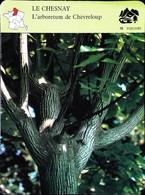 LE CHESNAY - Arboretum De Chèvreloup  - Photo Erable Jaspé  - FICHE GEOGRAPHIQUE - Ed. Larousse-Laffont - Géographie