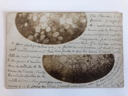 Foto Ak Celle Grains Et Cellules Etoiles De La Moelle Microscope A Professeur Ontogenie Phylogenie 1902 - Blumen