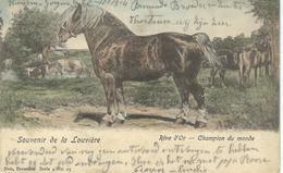 Souvenie De LA LOUVIERE : Rêve D'or - Champion Du Monde - Nels Série 4 N° 25 - Cachet De La Poste 1902 - La Louvière