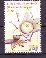 Montenegro 2020 FLORA Geastrum Berkeleyi MNH - Montenegro
