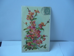 COGNASSIER DU JAPON THÈME FLEURS CPA 1907 - Blumen